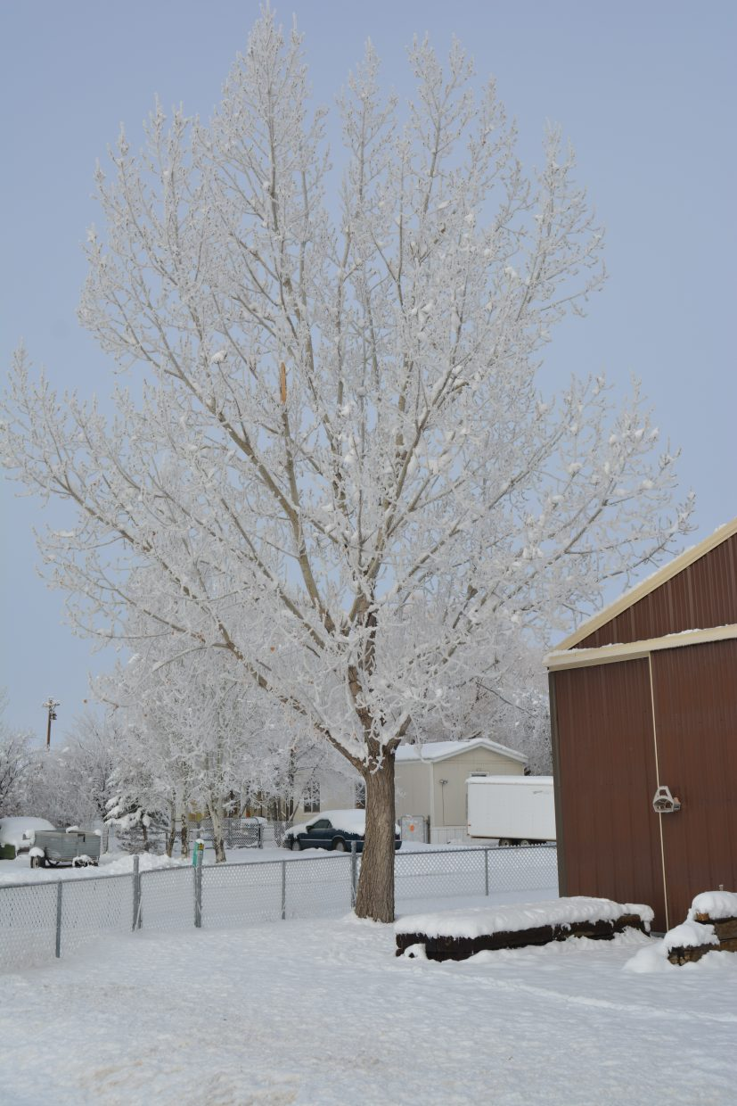 Allen Hischke, of Craig, snapped this photo of a frosted tree in Craig.