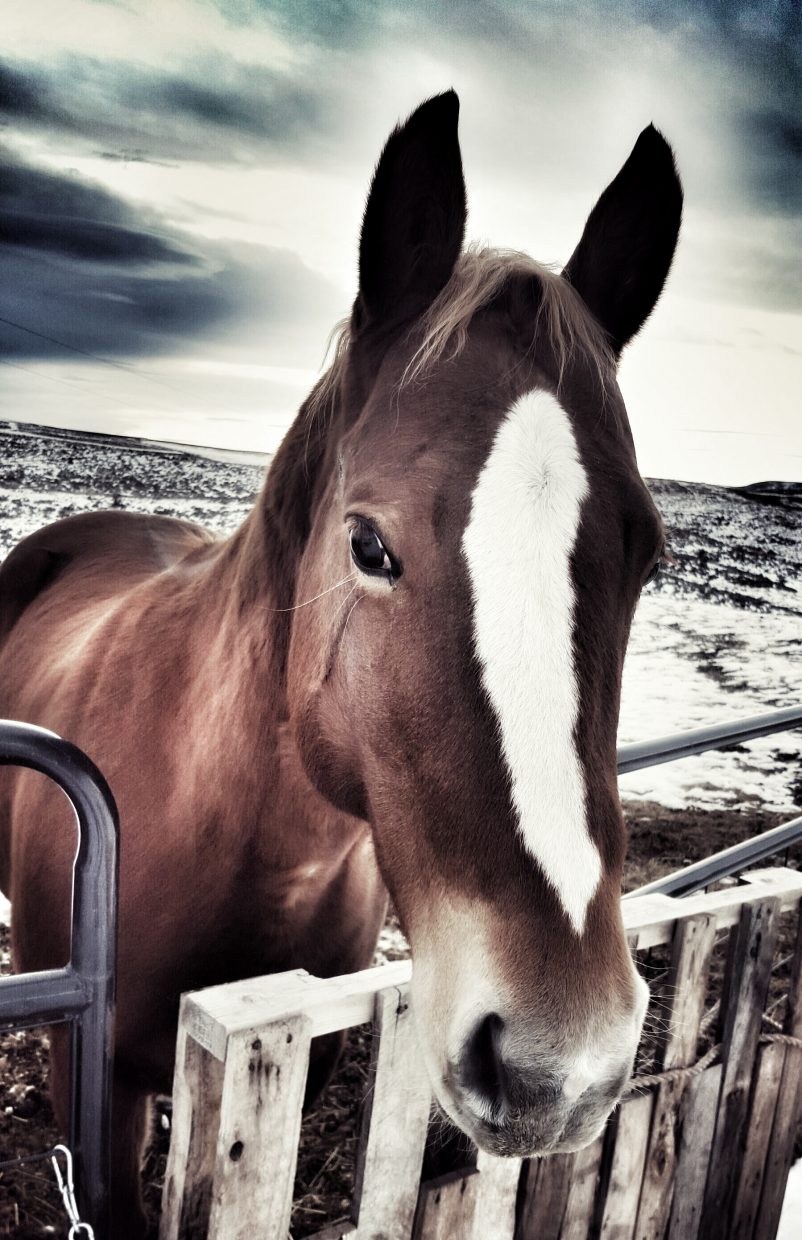 Ashely Anderson-Hauger, of Moffat County, submitted this photo of her horse.