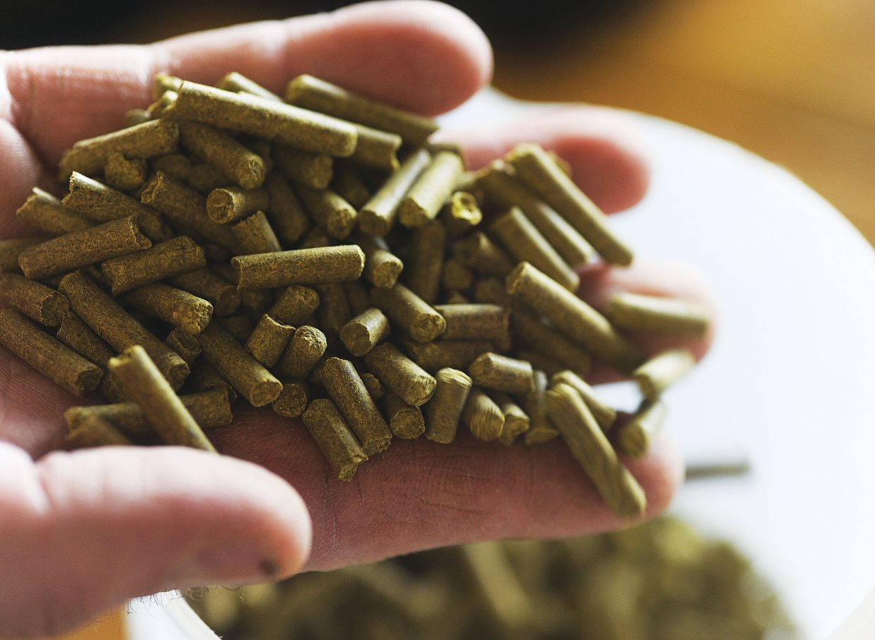 Willamette Hops are one of the main ingredients in Storm Peak Brewing's Funky Touch Belgium Style Pale Ale.