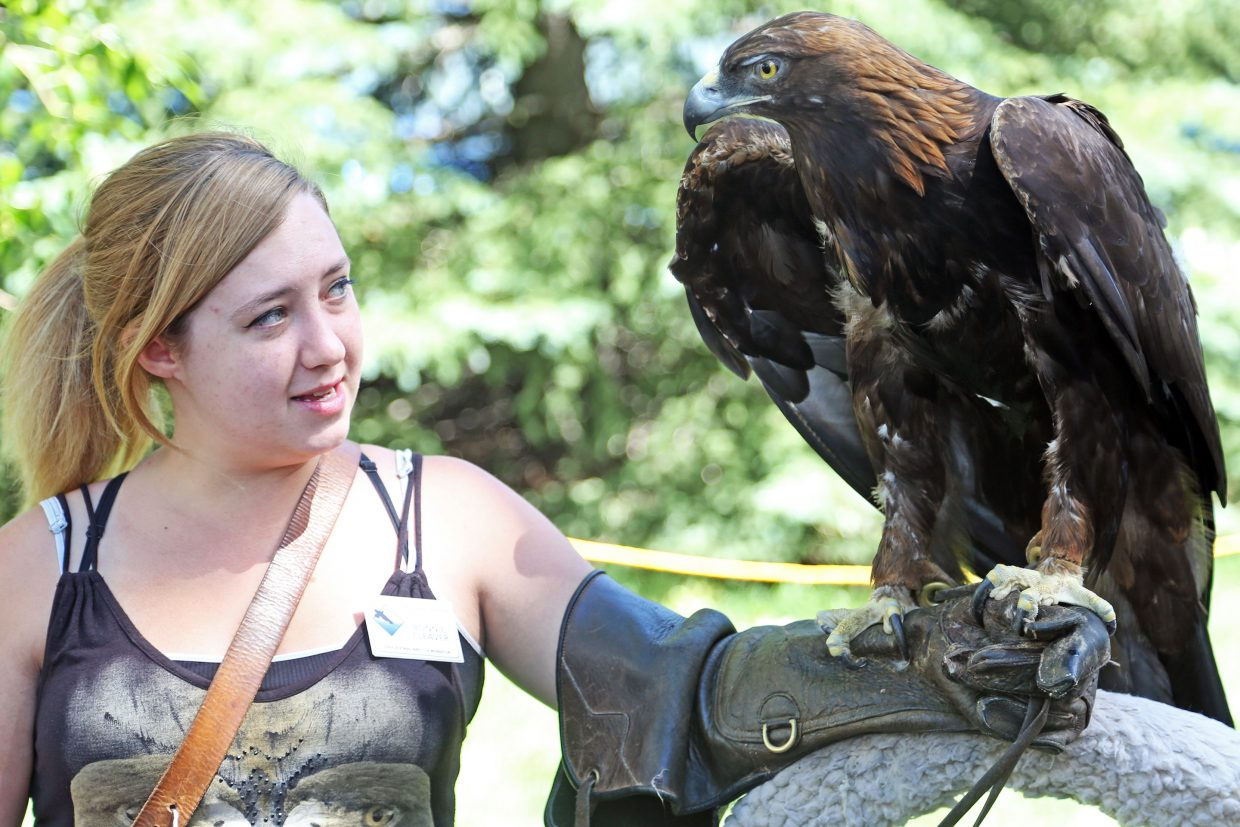 Bonnie Cleaver, of the Fort Collins-based Rocky Mountain Raptor Program, shows off a golden eagle Sunday during the 41st annual Art in the Park event at West Lincoln Park in Steamboat Springs. This particular eagle has spent the past 21 years in captivity after arriving at the rehabilitation center in its youth with a broken wing, which has never fully healed.