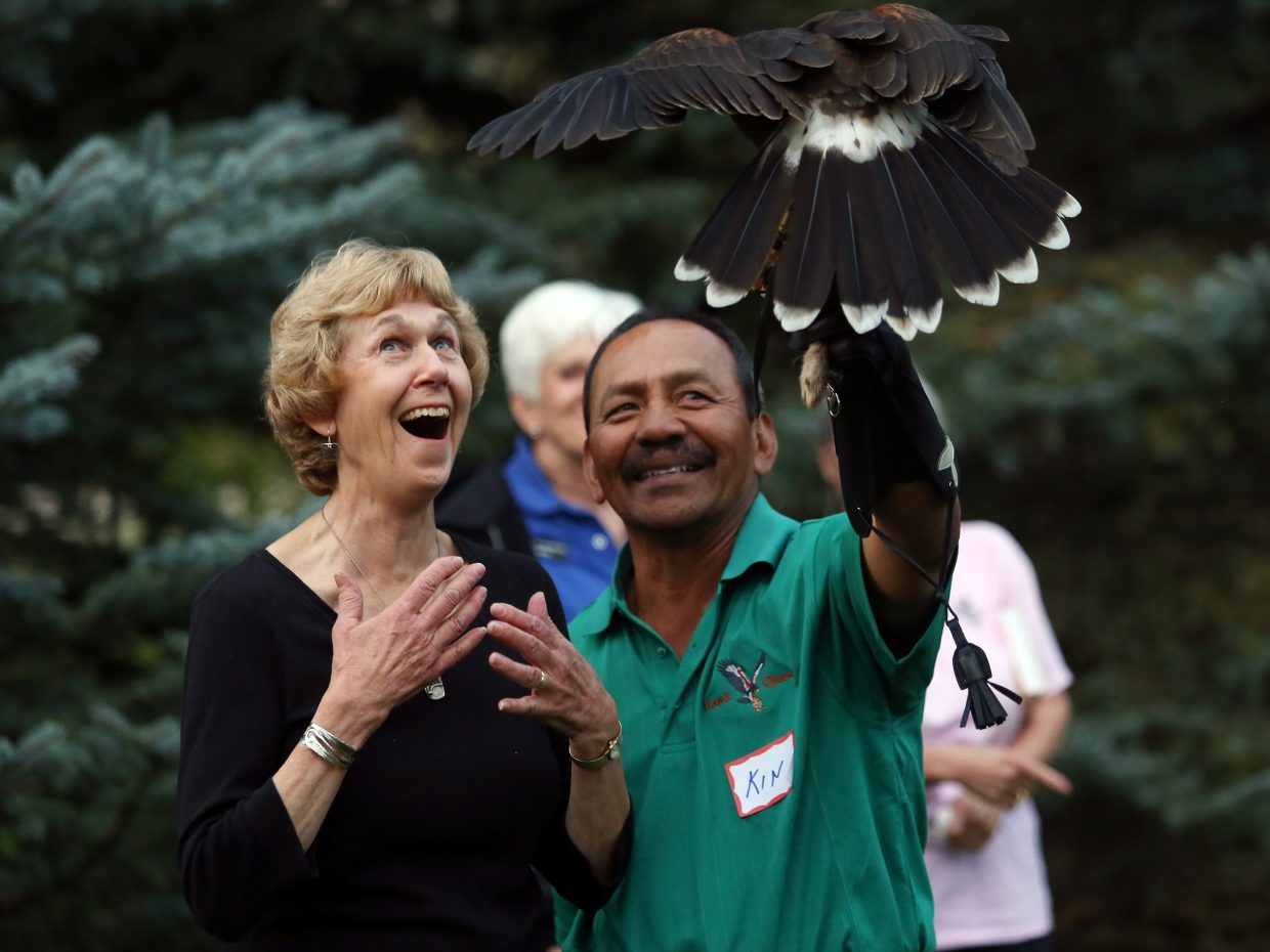 Nancy Merrill, the co-founder and president of the Colorado Crane Conservation Coalition, is delighted when this hawk flew to her and HawkQuest's Kin Quitugua during a private reception Sunday evening outside Hayden. The reception was part of the Yampa Valley Crane Festival in honor of its speakers and volunteers. The festival's final day is Monday, with local biologist Van Graham giving a talk about the sandhill cranes at noon inside Bud Werner Memorial Library. There will be educational crane displays outside Library Hall all day.