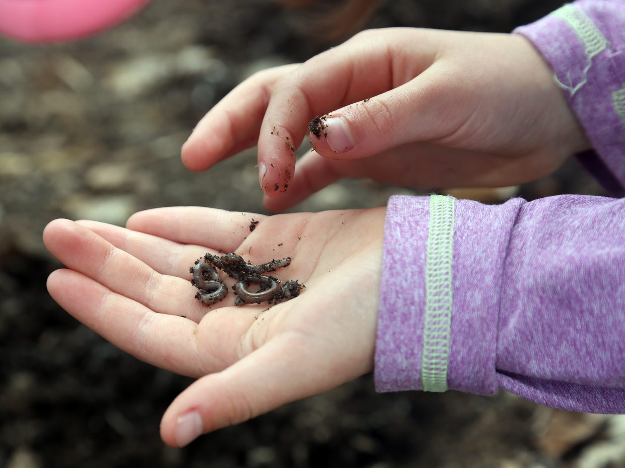 This Saturday is Earth Day what will you do to give back?  (In this photo: Lucy Fryer, shows off the worms she dug up during a city-sponsored trip to Carpenter Ranch for Earth Day last year).