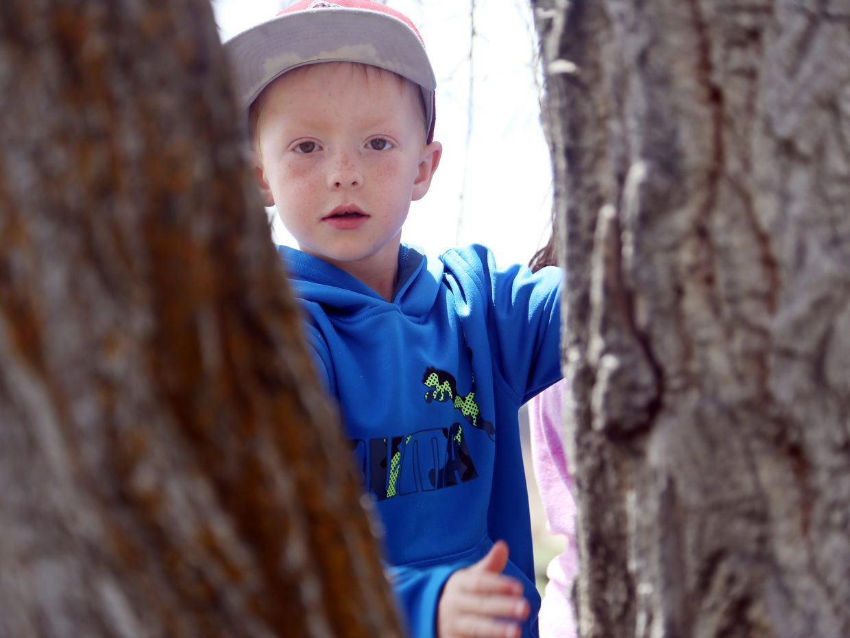 Parker Horne peers through the trunks of a tree Friday at Carpenter Ranch.