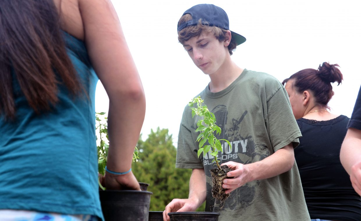 Yampa Valley High School student Dylan Rice prepares a plant to be potted at the Yampa River Botanic Park's Trillium House on Friday afternoon.