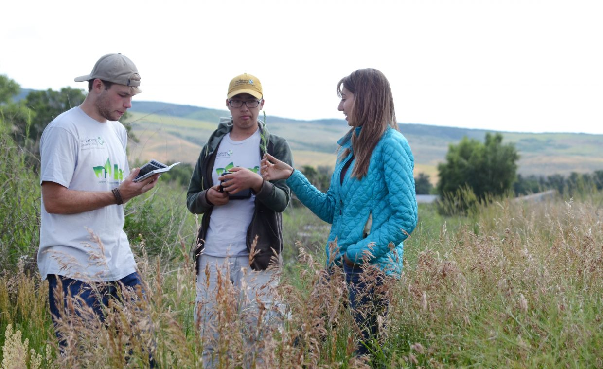 Student-interns Victor Germain, 19, and Brandon Hua, 17, get a quick quiz on weeds from University of Redlands student Anyssa Haberkorn on Friday at the Carpenter Ranch outside Hayden.