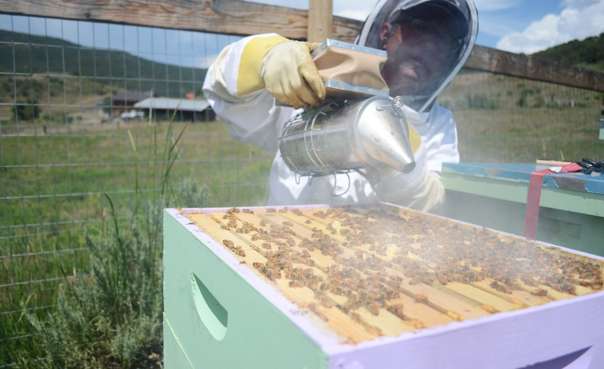 Dave Truly smokes his bees every Sunday, a method to calm them down so he can sift through their hives. Truly and his wife have seven hives on their property near Stagecoach.