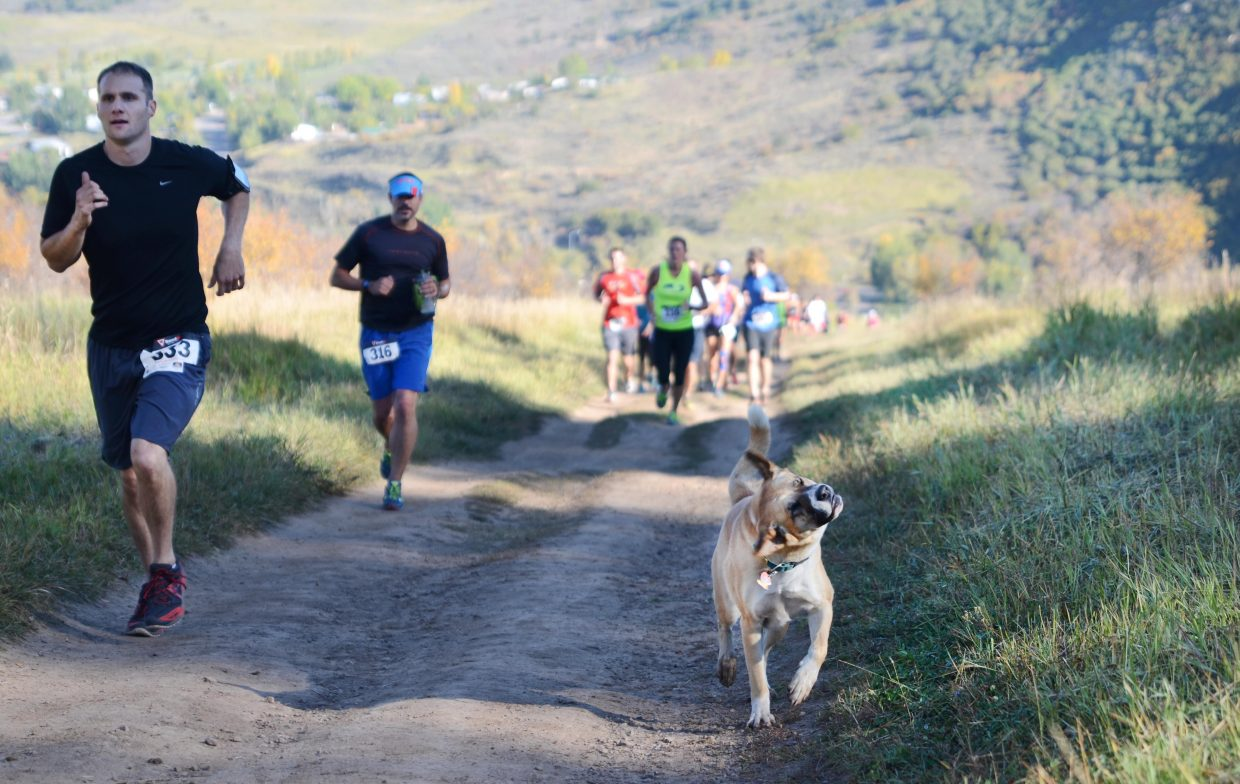 Tessa the dog gets some cardio in during the Emerald Mountain Trail Run Saturday morning.
