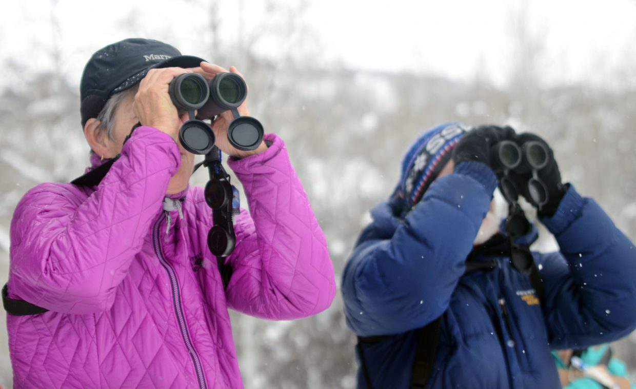 Tresa Moulton, left, and David Moulton spot some birds on some property along Anglers Drive on Saturday morning. The annual Christmas Audubon bird count ended with more than 2,500 birds counted and recorded. Last year was a record year with 3,200 birds identified.