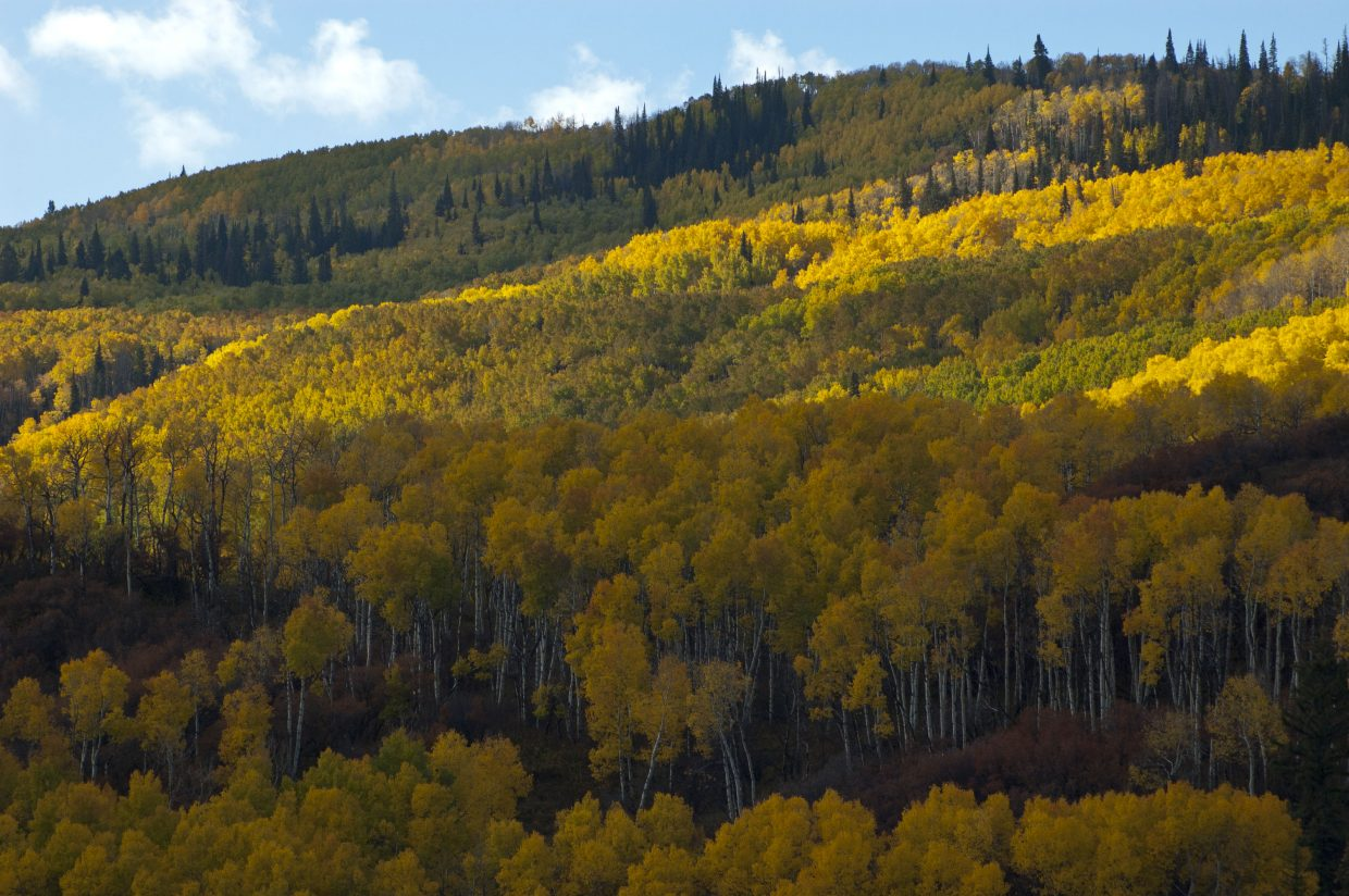 West Routt County, south of Hayden. Submitted by: Dan Torgler