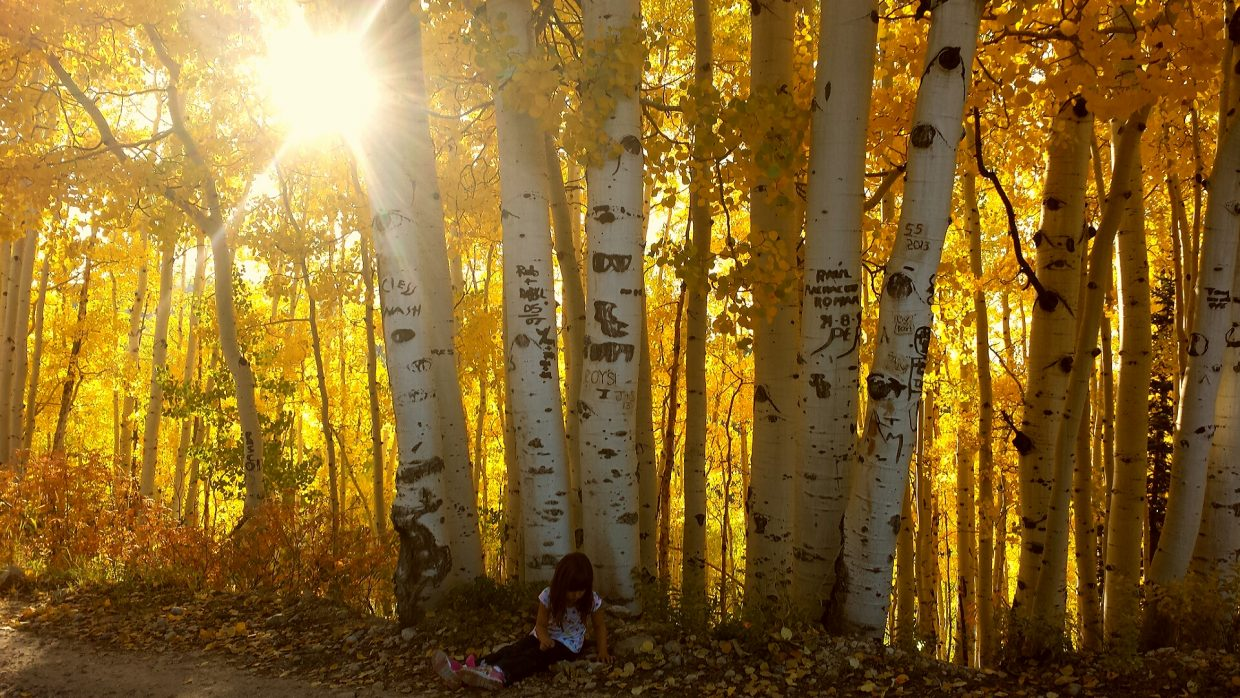 """""""Child's play"""" aspen canopy on Buff Pass. Submitted by: Courtney Cooper"""