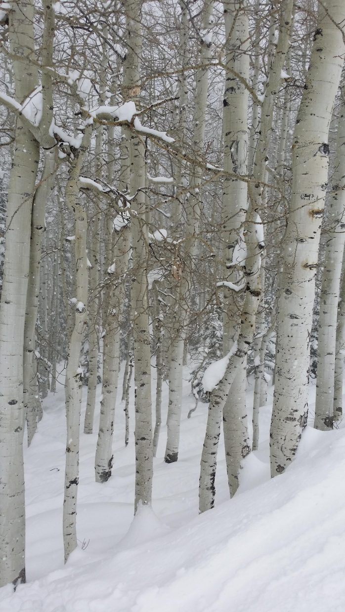 Aspens. Submitted by Jane Connor.