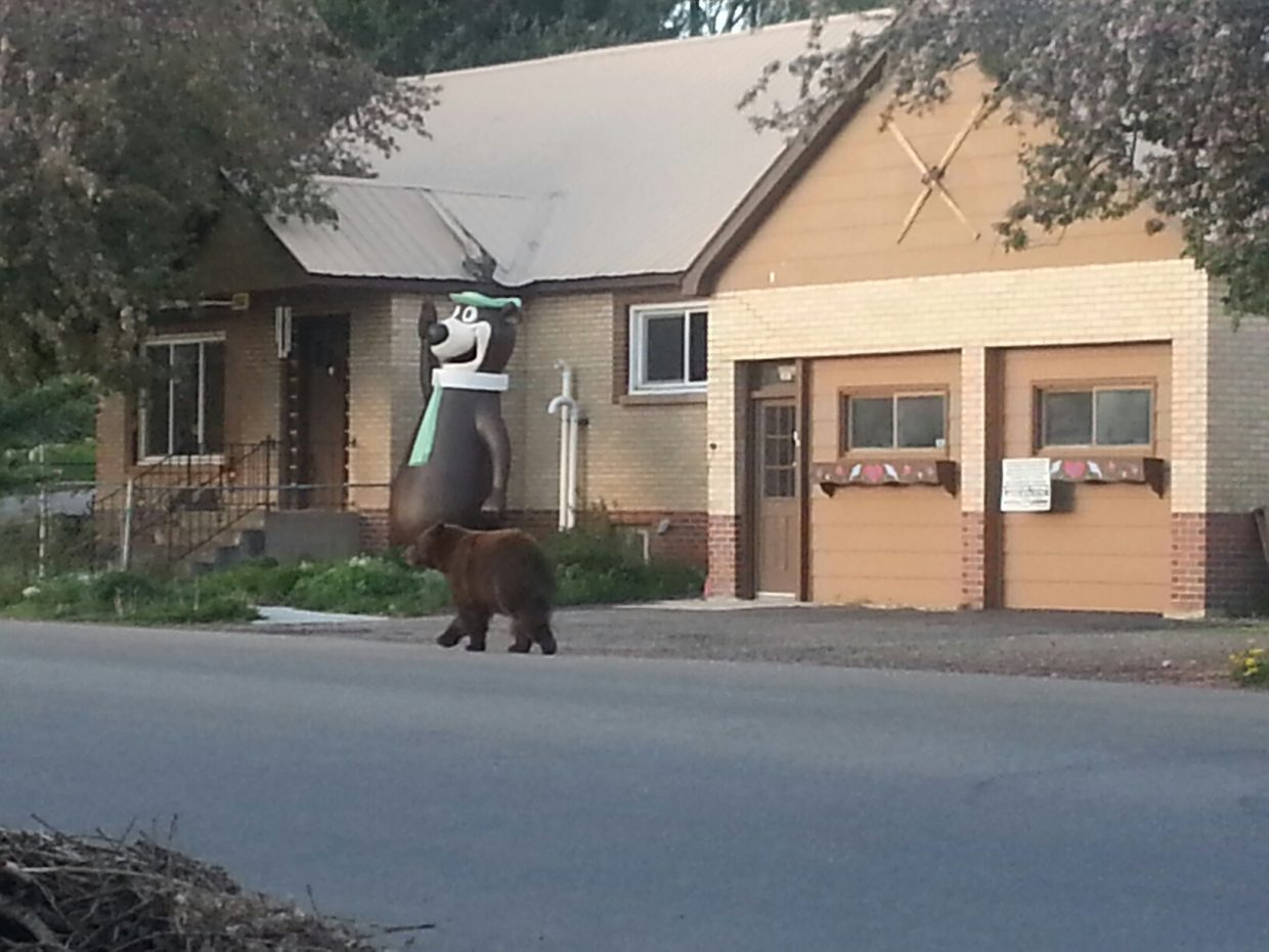 Bears on Laurel Street. Submitted by: Allison Harris