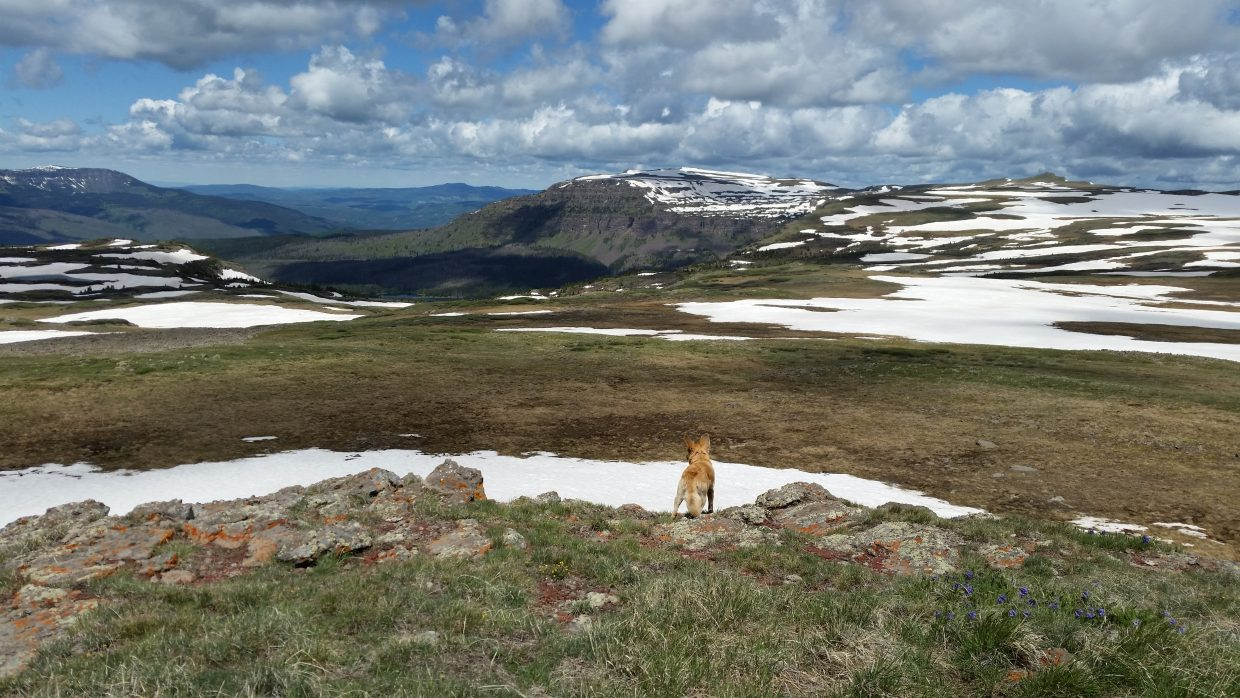 Just pass Devils Causeway with Millie In the foreground on Saturday. Submitted by: Eric Wood