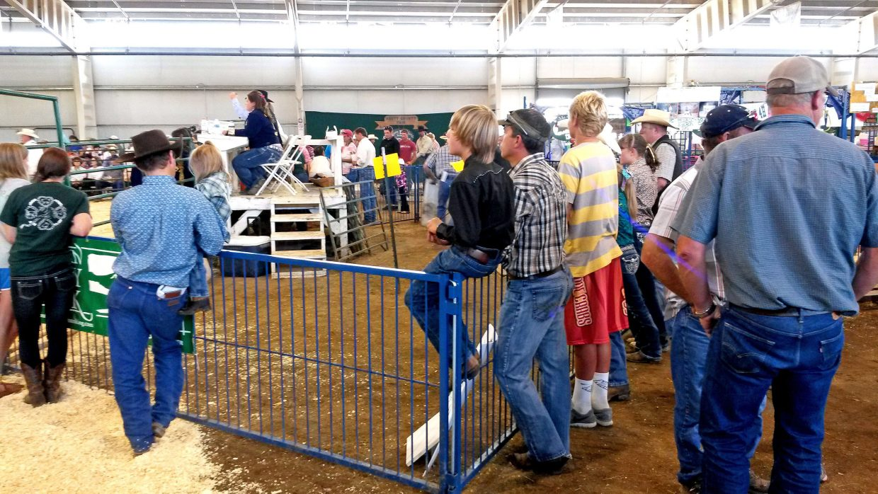 4H club members participate in the 100th annual Routt County Fair livestock auction. Submitted by: David Torgler