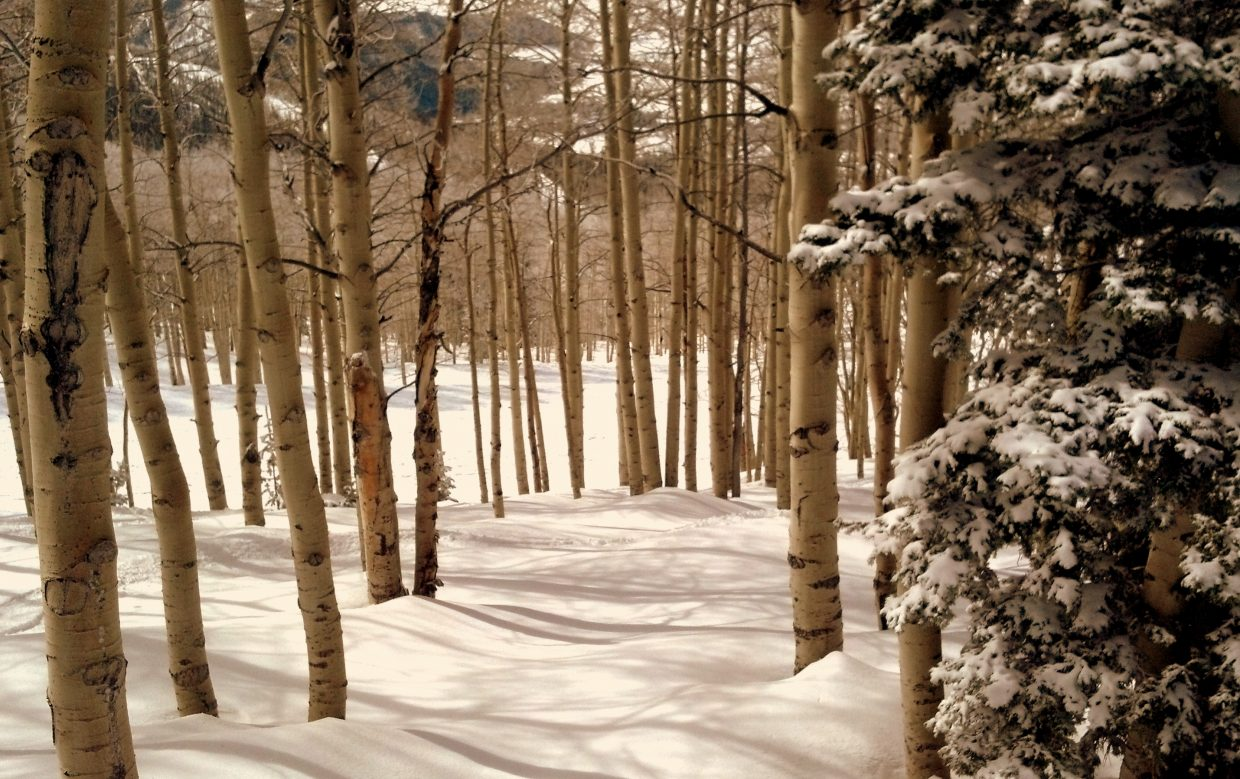 Plotting my downhill ski route through the trees near 4 Points lift on Tuesday. Submitted by Ted Carleton.