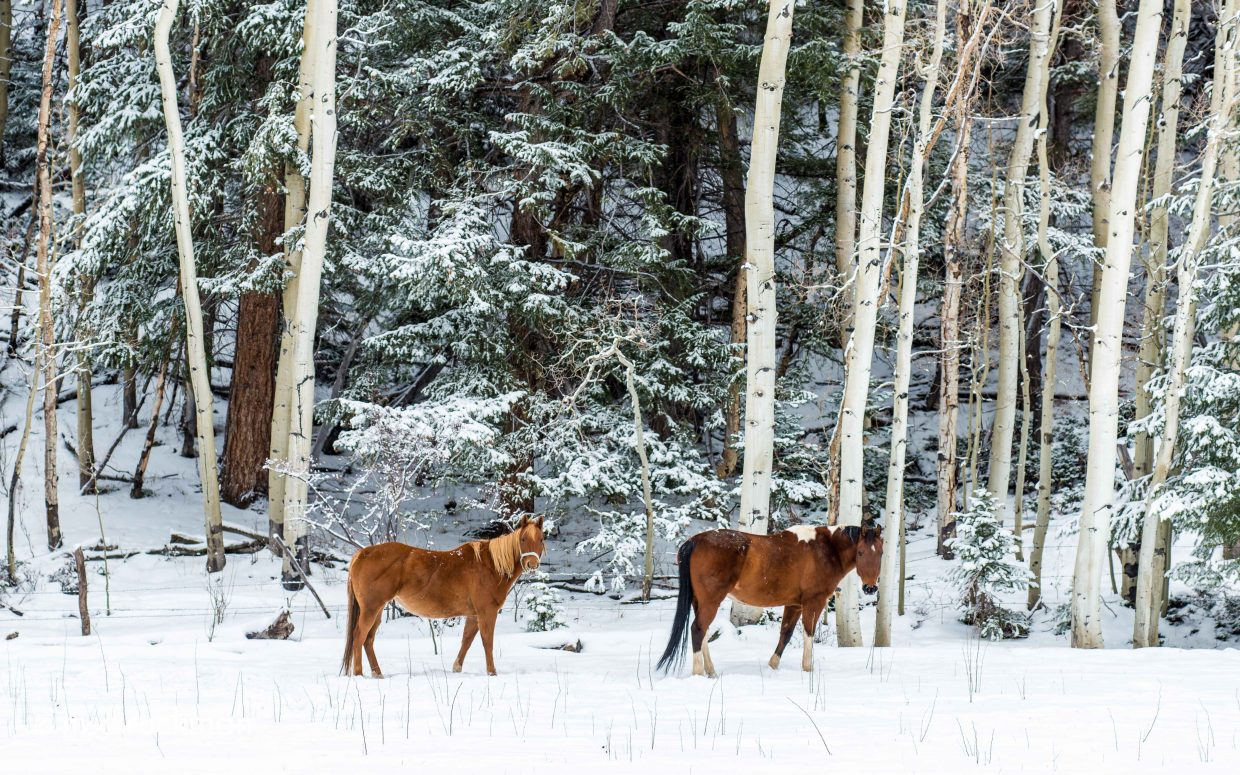 Yampa horses. Submitted by: Mark Ruckman