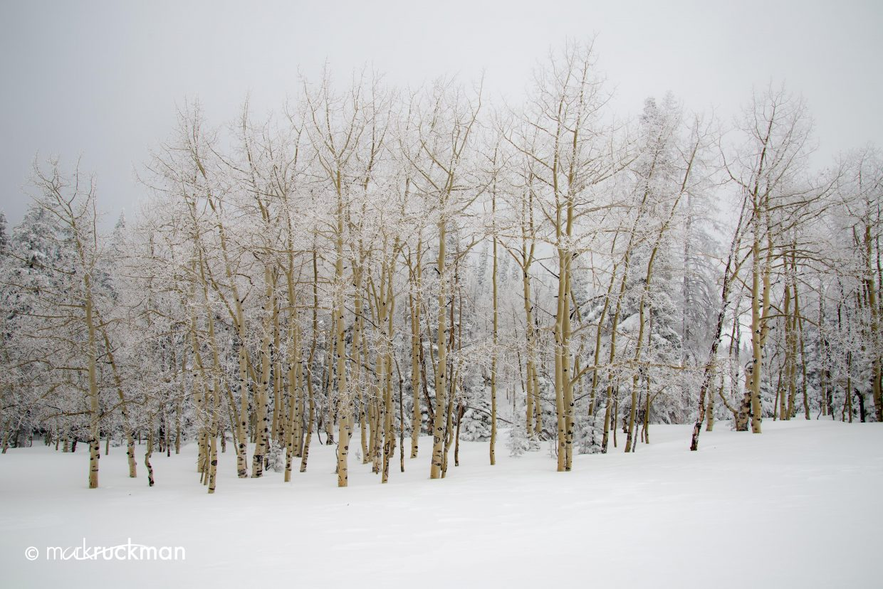 Frosted forest. Submitted by: Mark Ruckman