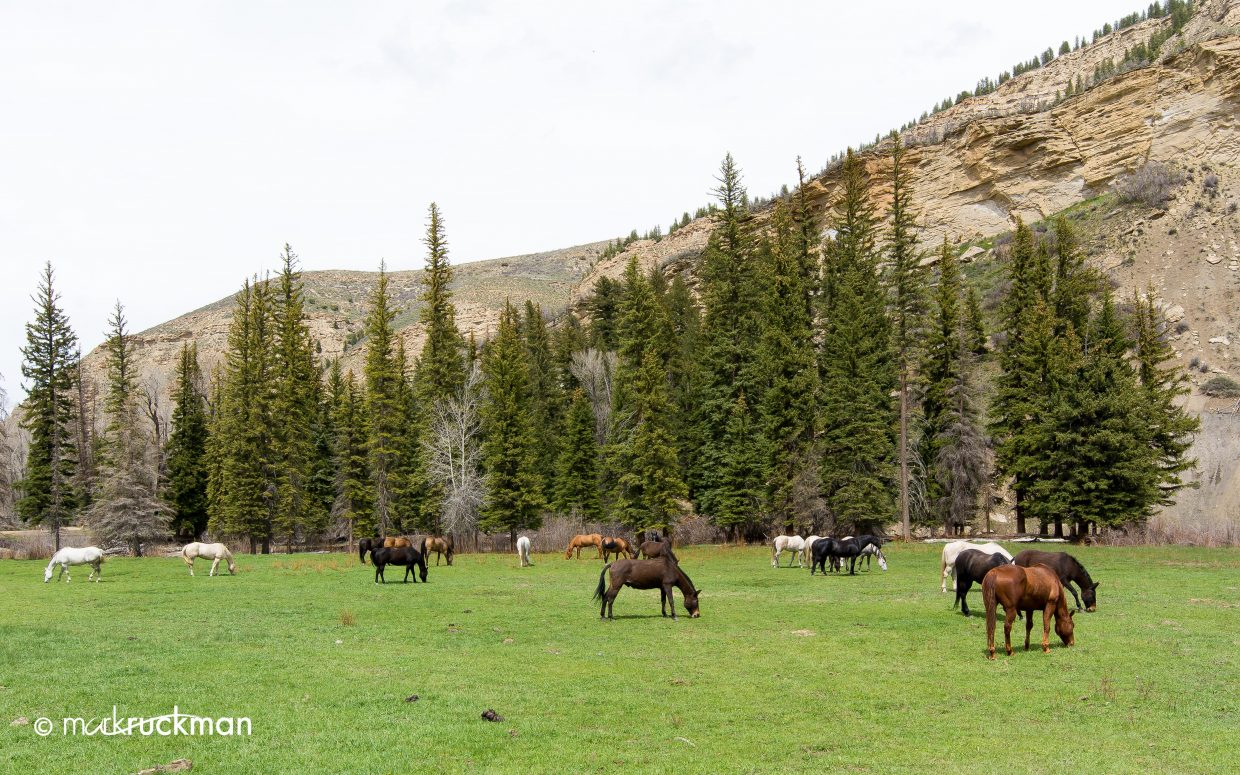 Springtime in Routt County. Submitted by: Mark Ruckman
