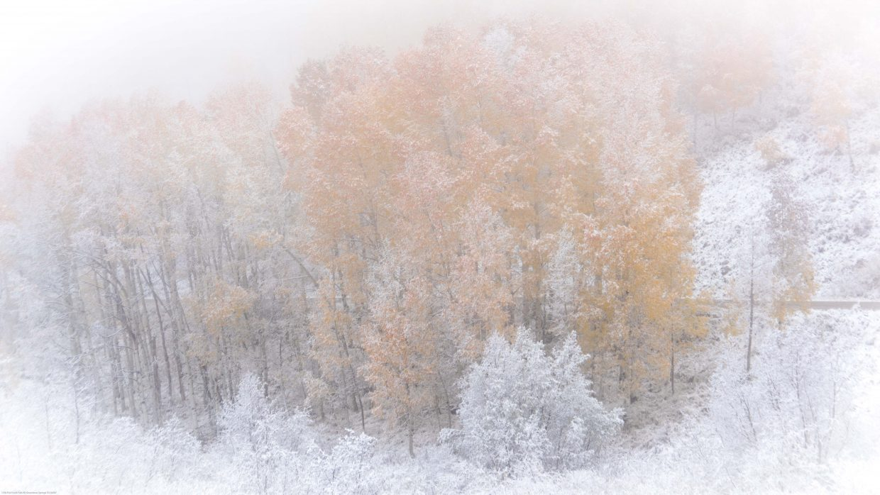 Sunday snow, fog and aspens make a lovely setting. Submitted by: Mark Ruckman