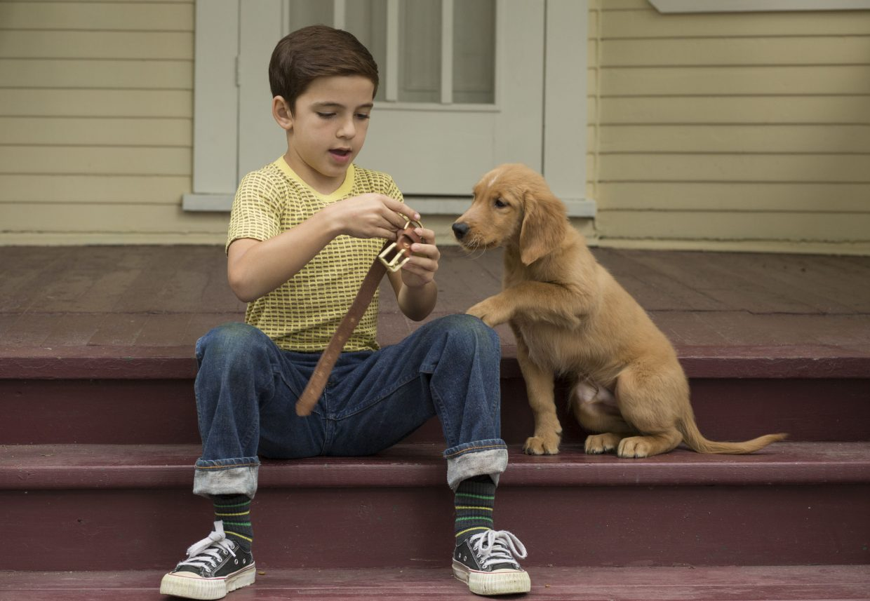 """Ethan (Bryce Gheisar) presents his new dog Bailey (voice of Josh Gad) with a collar in """"A Dog's Purpose."""" The movie is about a dog who experiences multiple lives through reincarnation."""