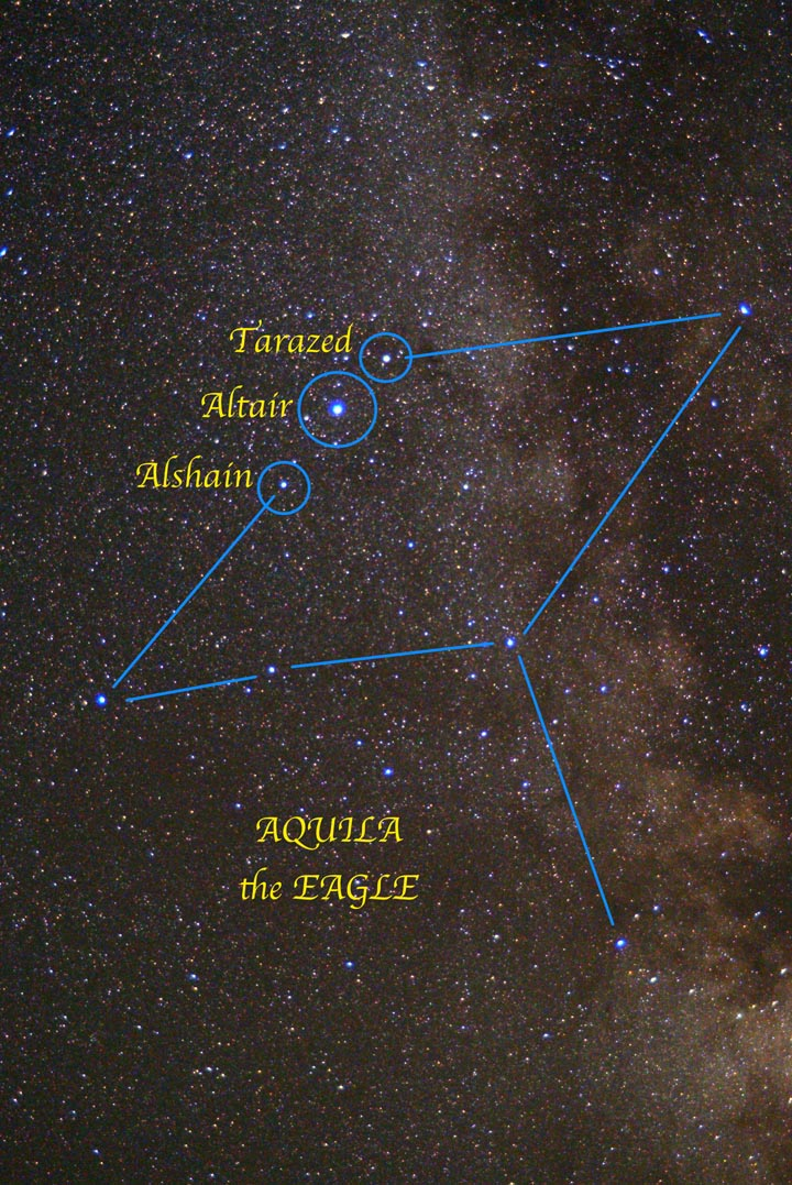 Aquila, the Eagle, soars high overhead on early autumn evenings. The prominent trio of stars Alshain, Altair and Tarazed mark the Eagle's head. Altair also anchors the southernmost corner of the Summer Triangle asterism.