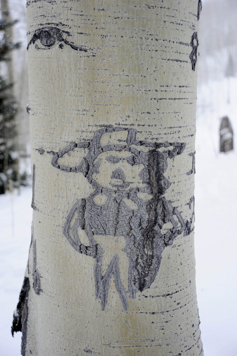 The exact location of the giant Routt County aspen tree is being kept secret due to concern about potential vandalism. A Peruvian sheep herder carved in this nearby tree.