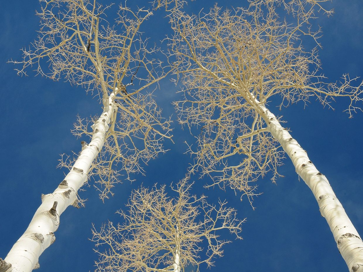 Aspens and blue skies at Steamboat Ski Area. Submitted by Jeff Hall.