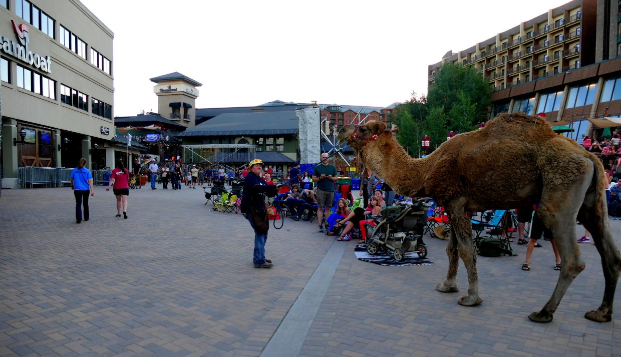 Here is your Balloon Glow picture for tonight. Sorry it is a little late. Also, Larry the Camel stopped by Gondola Square to go to a birthday party at the Truffle Pig tonight, as the Balloon Glow was getting started. That's Bethany Aurin trying to get Larry to walk through the Steamboat Promenade. Submitted by Shannon Lukens.