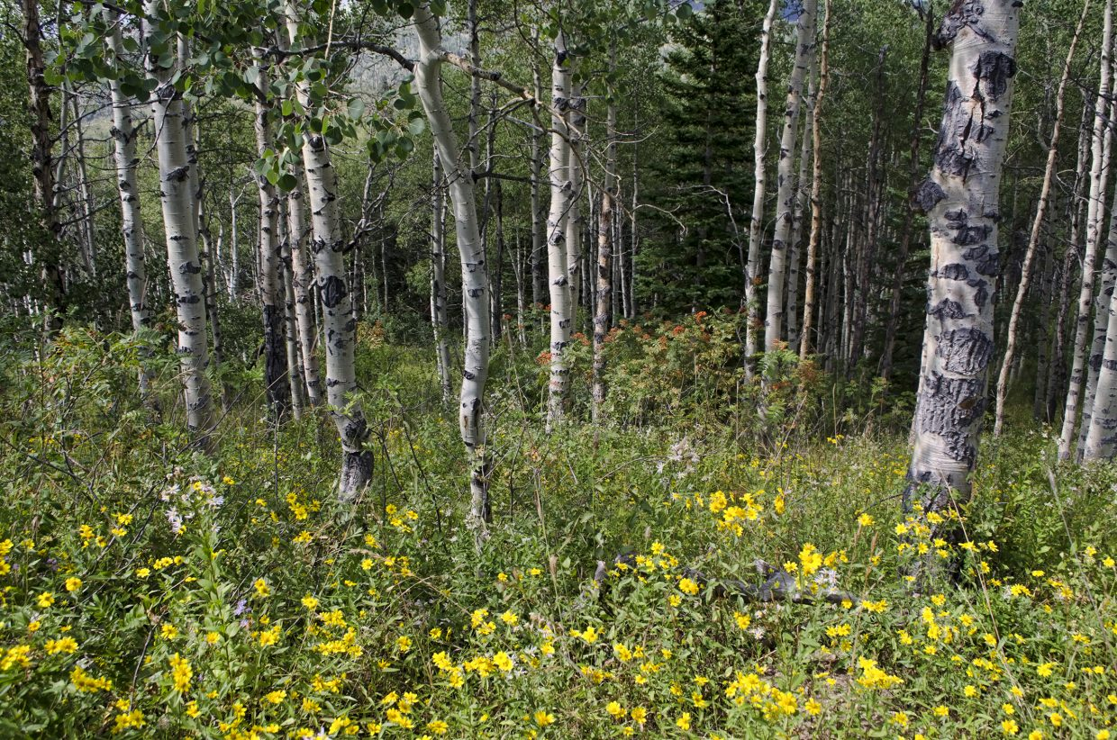 Wildflowers on the trail to the Rabbit Ears. Submitted by Winchester Dermody.