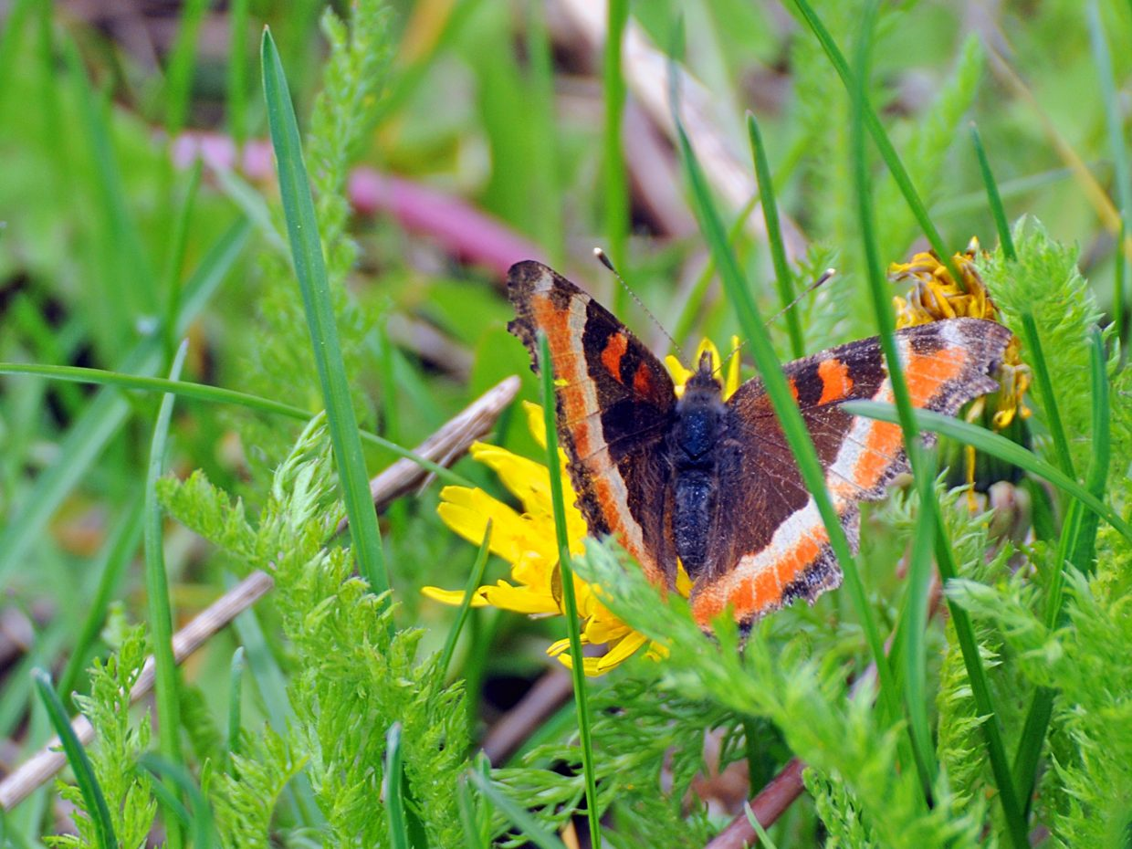 Butterfly along the Mad Creek Trail. Submitted by Jeff Hall.