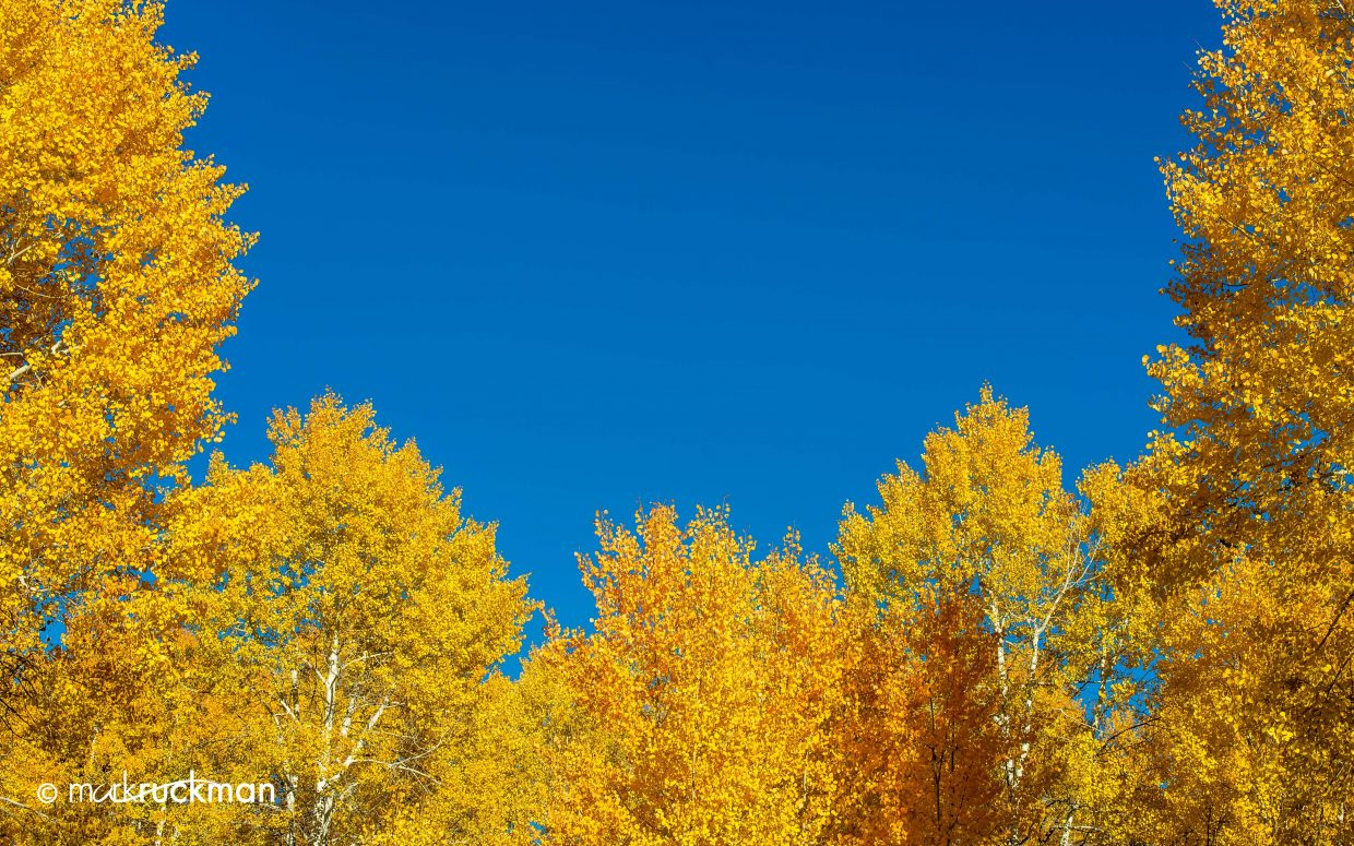 Colorado Gold Rush under perfect Colorado skies. Submitted by: Mark Ruckman