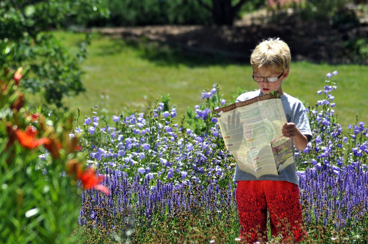 Sam Antinoro studies the map of the Yampa River Botanic Park in a field of flowers during a Music on the Green event at the park.