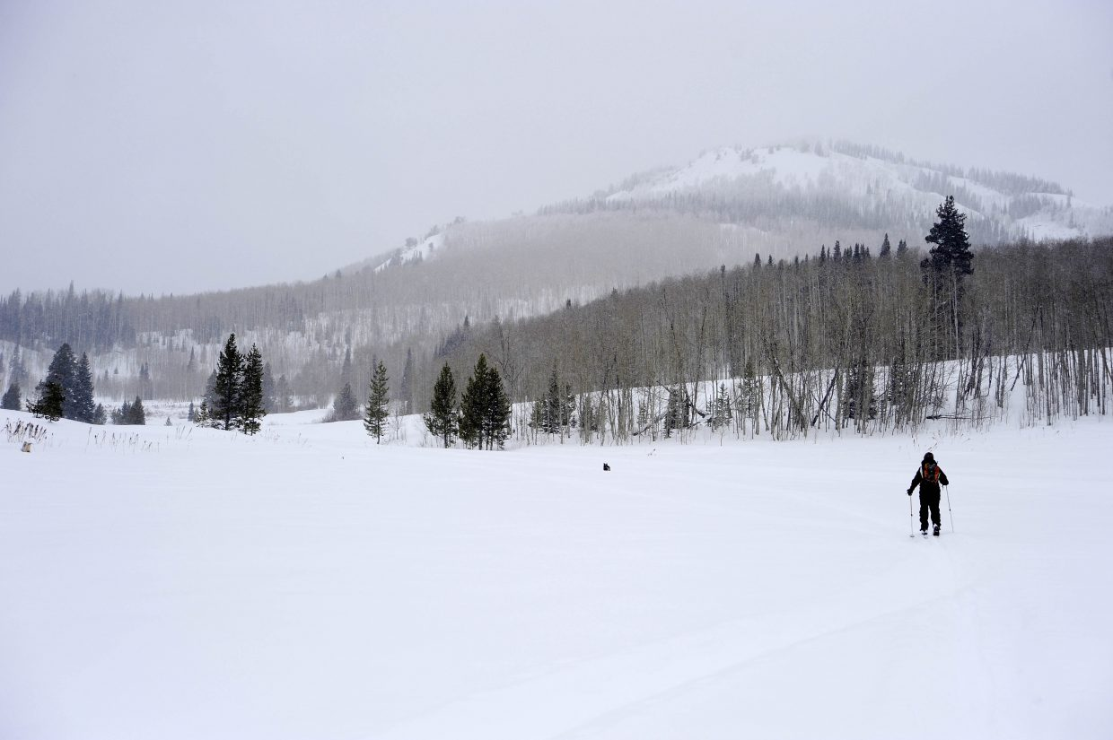 Amy Kenyon skis in search of the largest known aspen tree in Routt County.