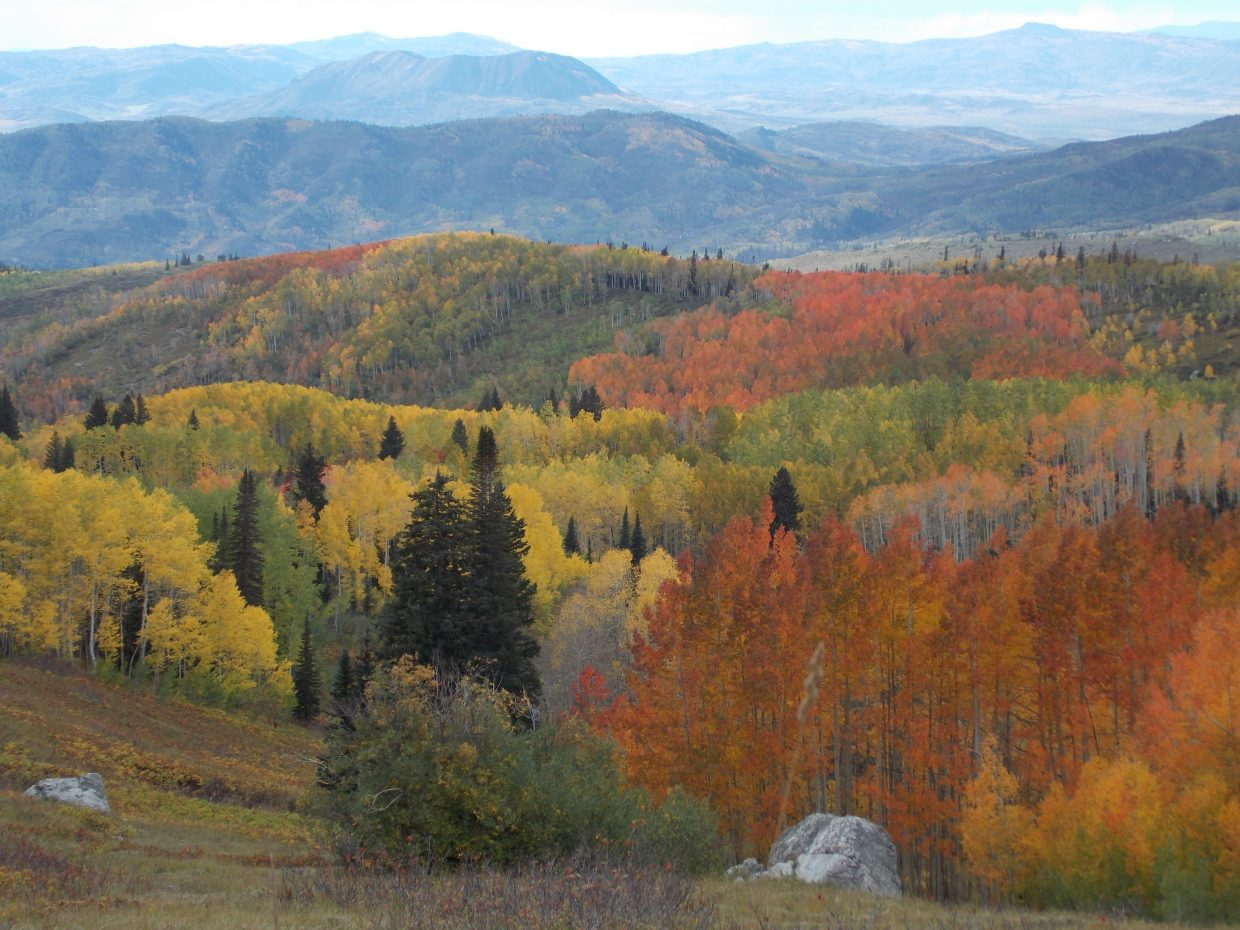 Autumn lights on Buff Pass. Submitted by: Susanmarie Oddo