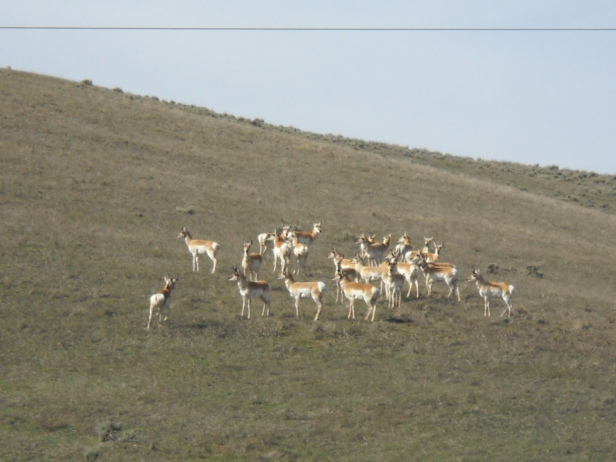 Antelope near Craig. Submitted by Shelly McGhan.