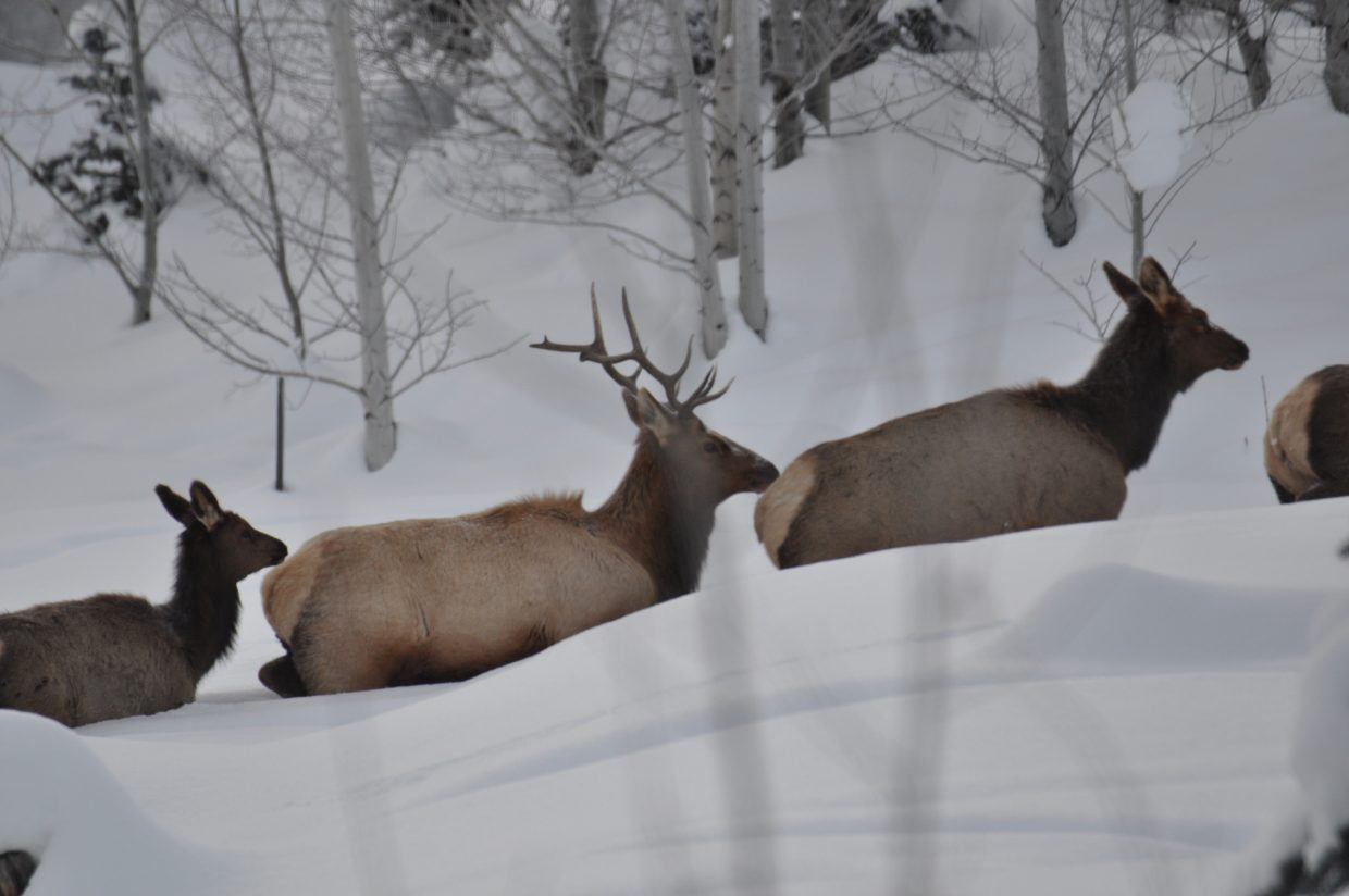 Elk on Hunters court Submitted by Kevin Cerone.