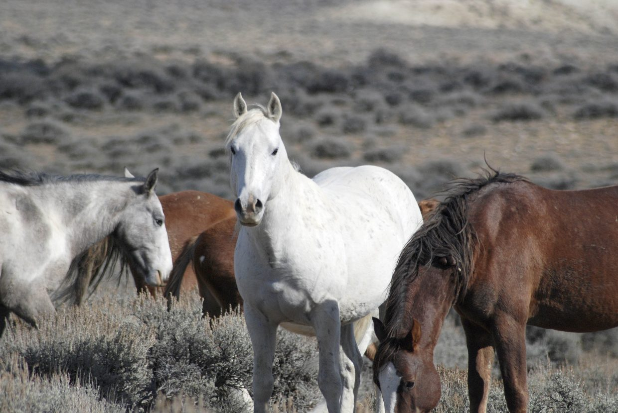 Wild horses at Sand Wash Basin on Sunday. Submitted by: Bob Reese