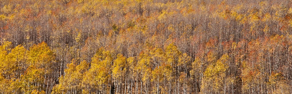 Last of the fall colors near Rabbit Ears. Submitted by: Madison Slater