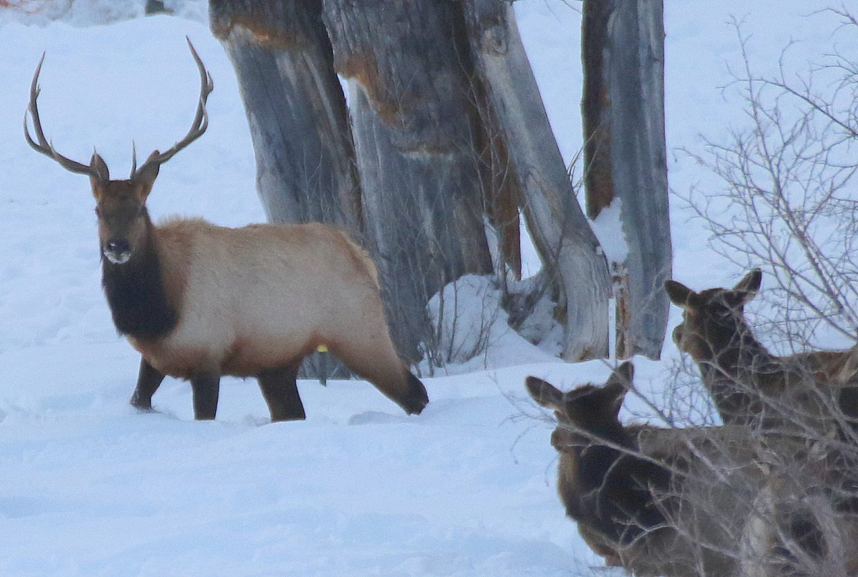 Elk in Moon Hill. Submitted by Diane Miller.