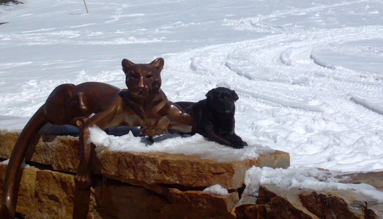 Saw this dog and cat walking at lunch on Monday and took a double take of the two animals. Submitted by: Vince Rosa