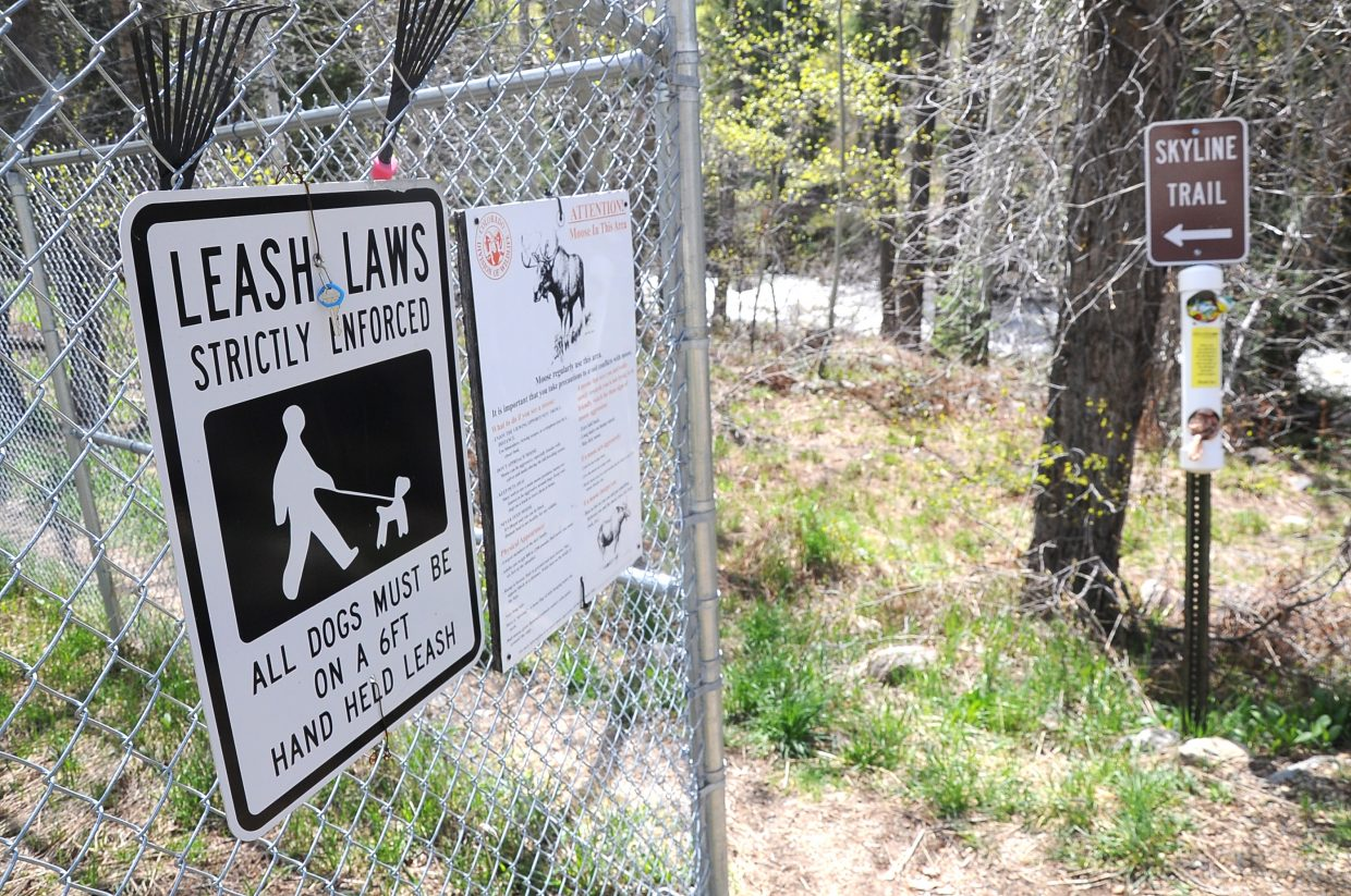 The city of Steamboat Springs has beefed up leash law enforcement after some dog owners who let their pets off leash were almost trampled by moose on popular trails