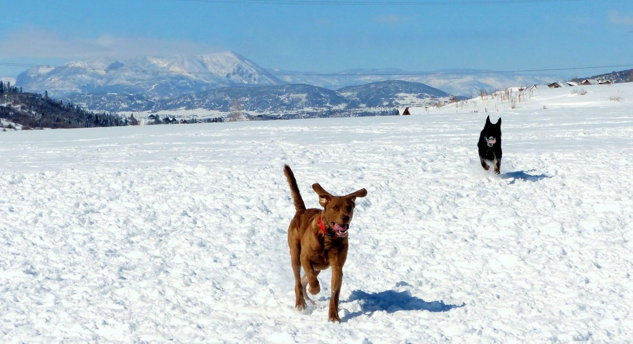 These two dogs (Trapper and Gunnar) were romping around the dog park at Rita Valentine Park today, with the Sleeping Giant Range in the background. Submitted by: Shannon Lukens