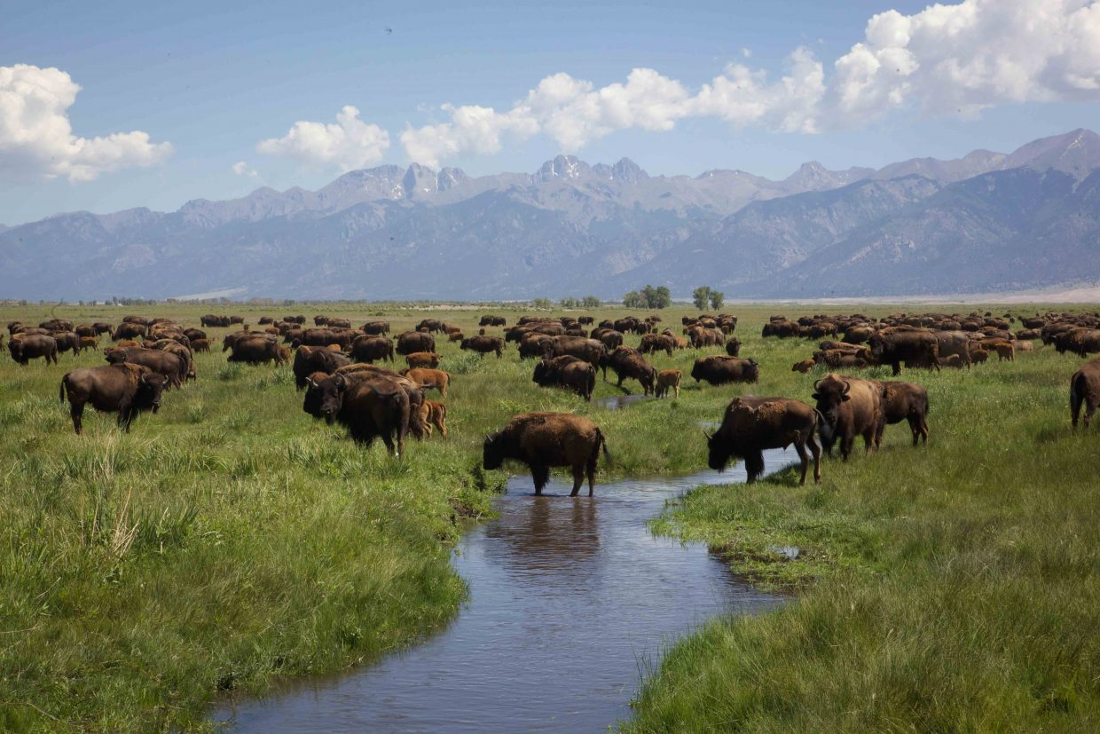 The Zapata Ranch is home to bison, cattle and horses. It is a nature preserve owned by the Nature Conservancy. The all-inclusive retreat offers working vacations with rustic-modern accommodations.