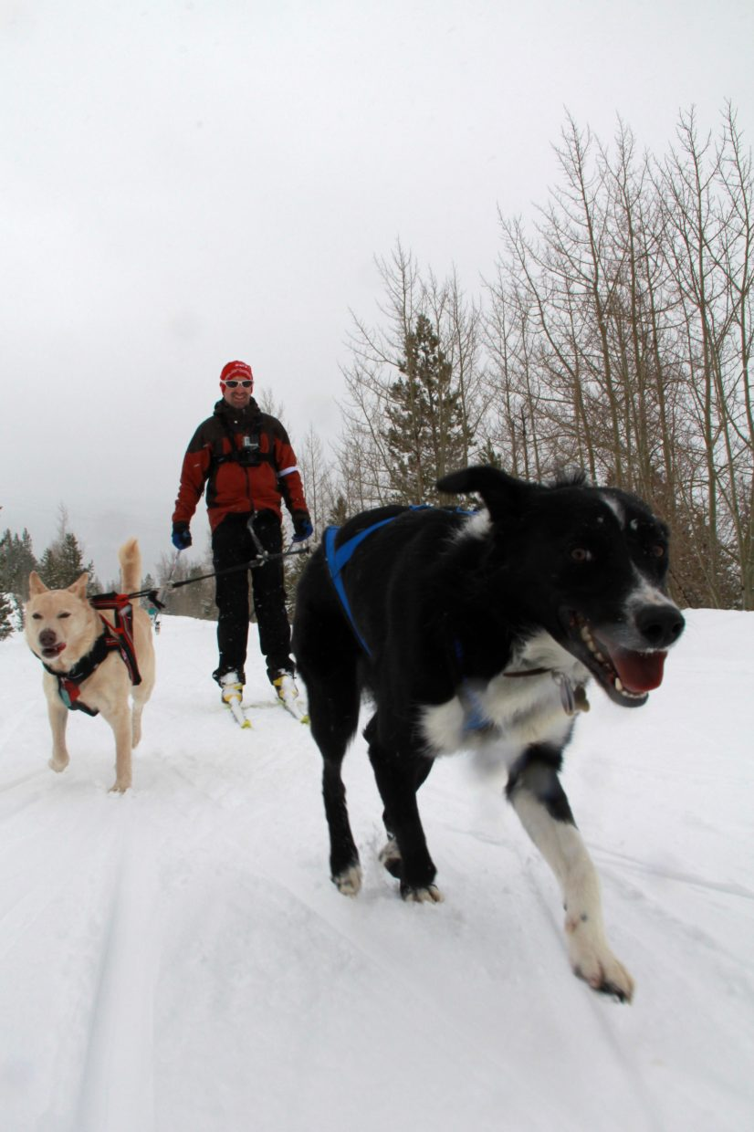 "High Country Dogs will be demonstrating skijoring on Saturday at Stagecoach State Park's ""Debunk the Winter Funk"" event."