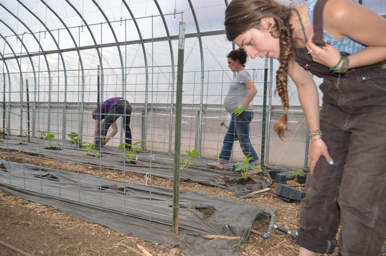Earlier this week, Elkstone Farm employees planted squash and other annuals. In this photo: Ali Giese, Natalie Savage and Alex Berger.