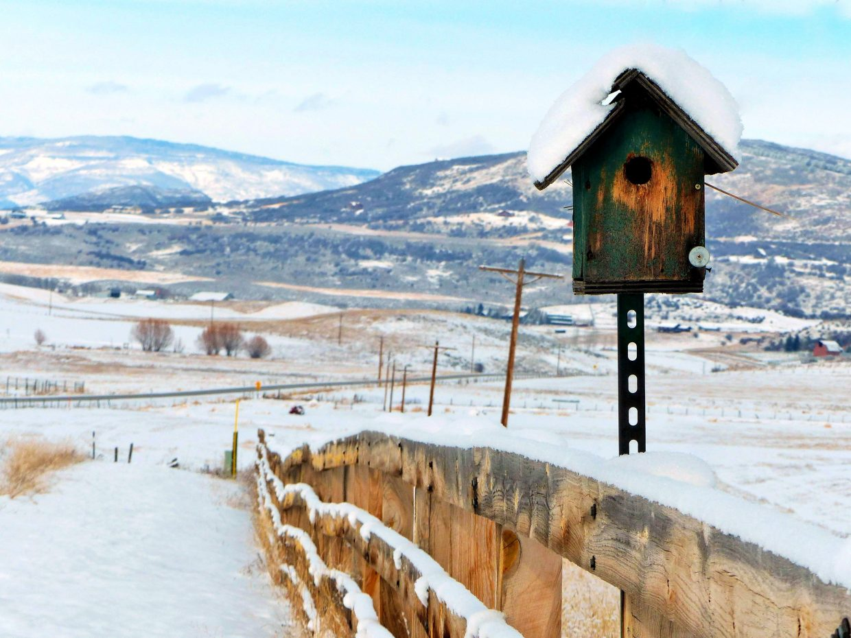 """Enjoy this snowy birdhouse on Elk River Road, just north of Steamboat."" Submitted by Shannon Lukens."