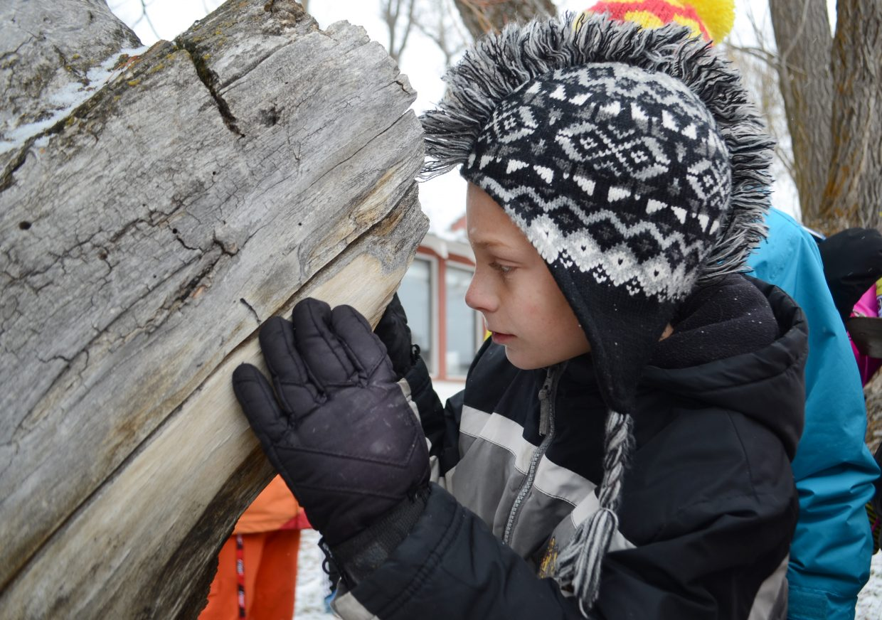 Steamboat Springs fourth-grader Braden Whitmore pokes his head into a hollowed-out area of a Yampatika Legacy Ranch tree Wednesday, taking note of a former nest a bird had called home last winter.