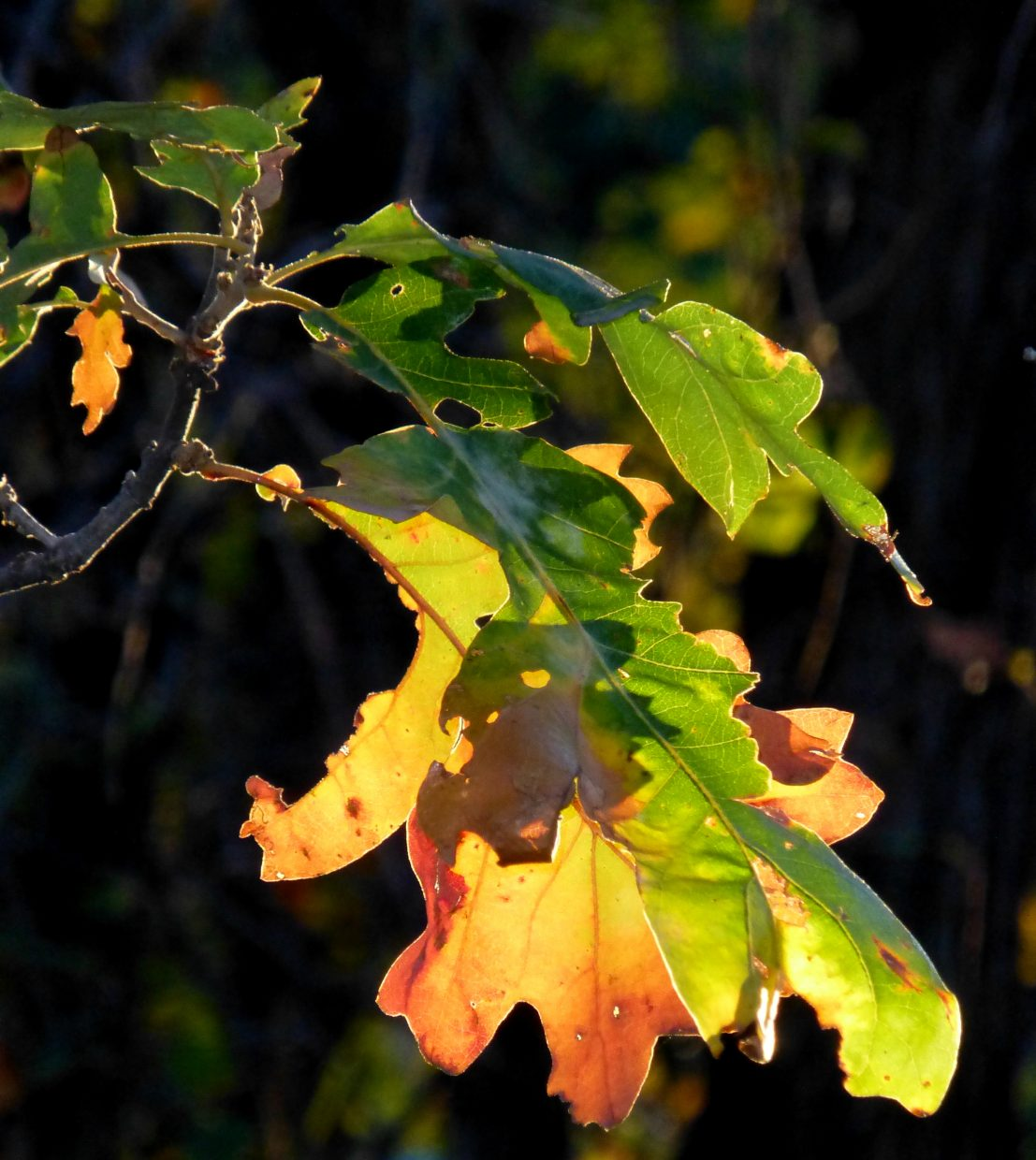 Fall leaves. Taken out by Hilton Gulch. Submitted by: Gail Hanley