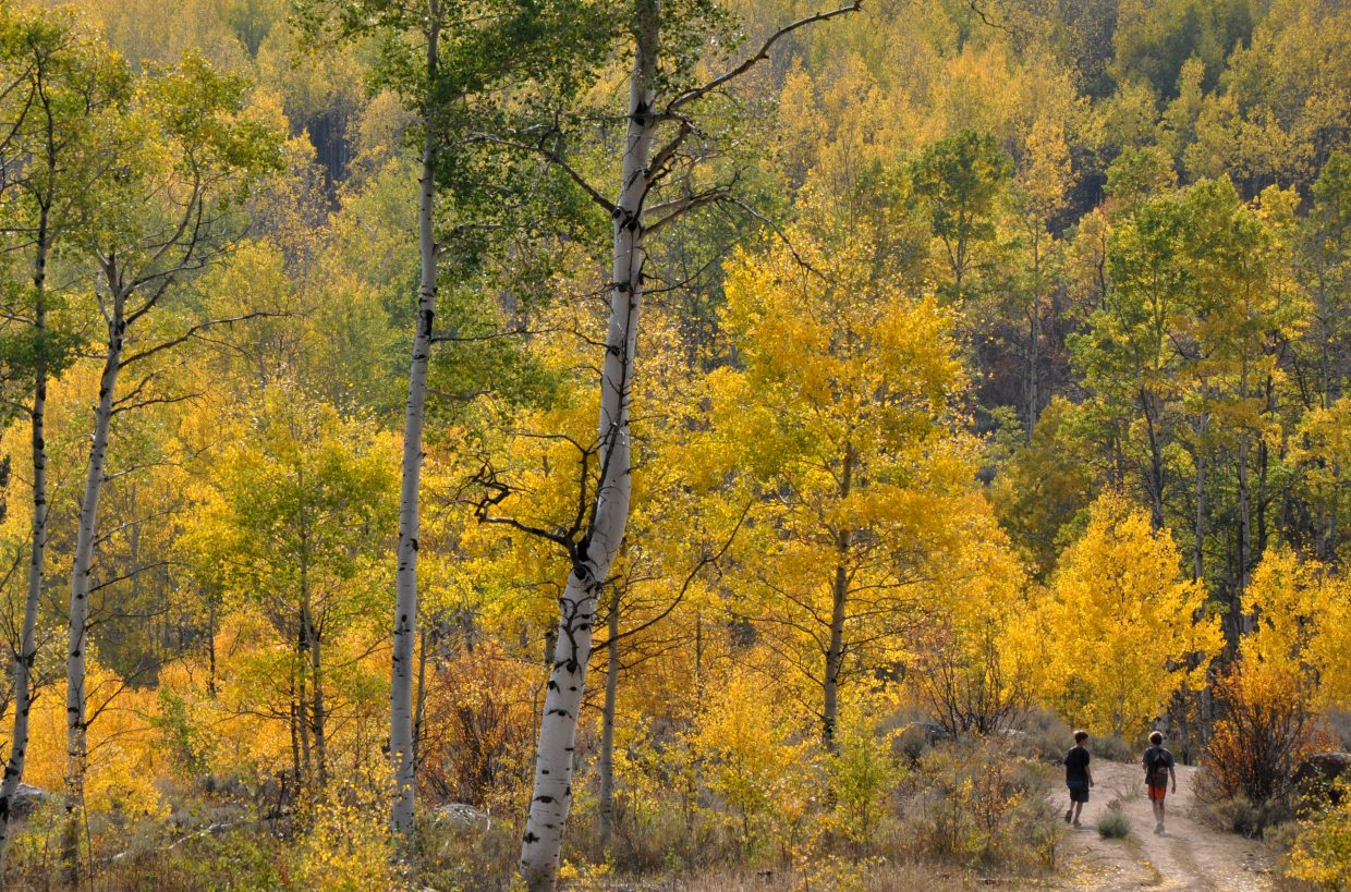 Children hike through an aspen grove near the Mad Creek Barn. The Mad Creek Trail is an easy and memorable fall hike. The trailhead is north of Steamboat on Routt County Road 129.