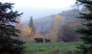 My daughter, Ashley Simon, got this pic on the way to school yesterday --- with her i-phone - in the sanctuary. Notice the second cub trailing behind! Submitted by Sarah Simon.